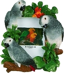African Grey Picture Frame 2