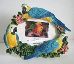 Macaw Picture Frame