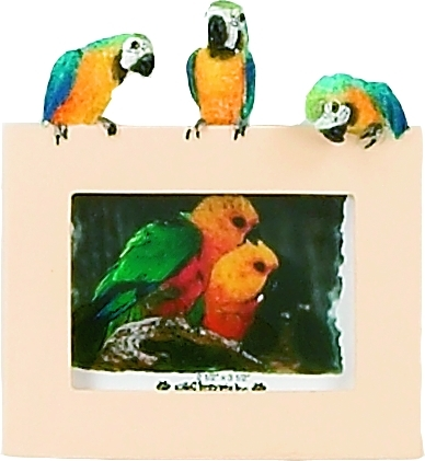 Desktop Macaw Picture Frame