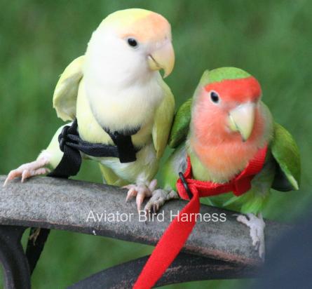 Aviator Harness and Leash, Mini Blue
