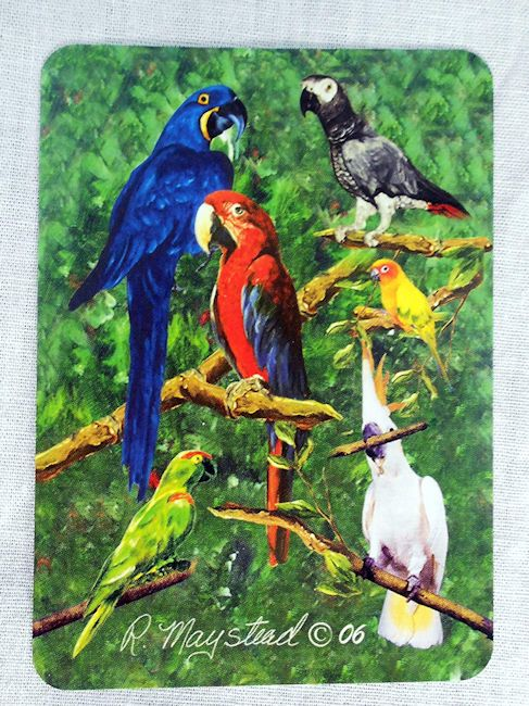 Parrot Playing Cards