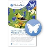 Window Alert (set of 4) - Butterflies