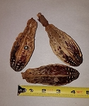 Mahogany Pods (pack of 3)