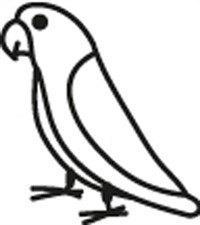 Window Decal - Parrotlet