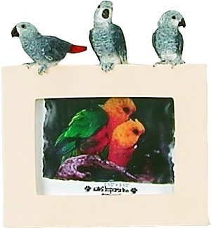 Desktop African Grey Picture Frame