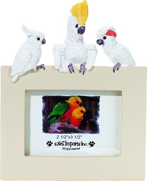 Desktop Cockatoo Picture Frame